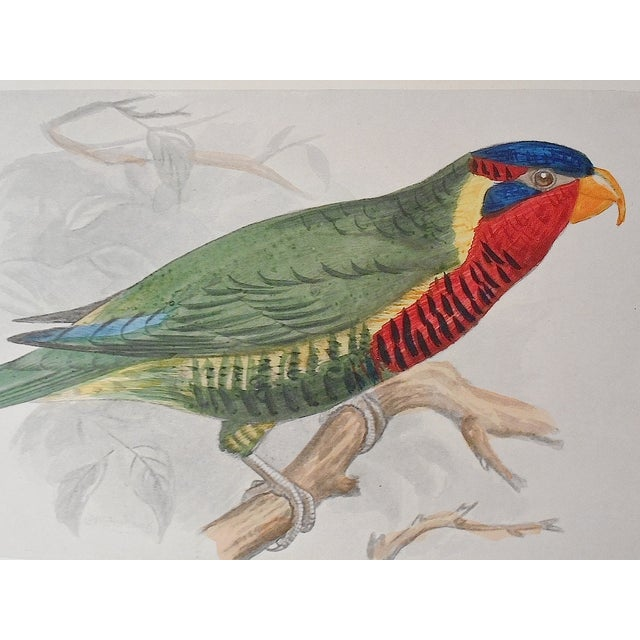 Antique 19th Century Parakeet Lithograph - Image 3 of 3