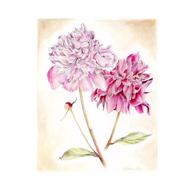 Peonies Original Mixed Media Drawing by Kathleen Ney For Sale In Seattle - Image 6 of 6