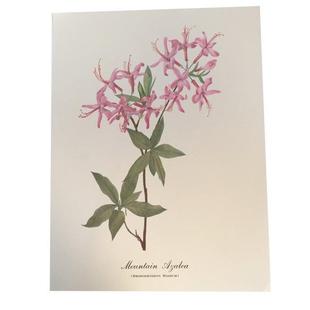 Mountain Azalea Botanical Print - Image 1 of 4
