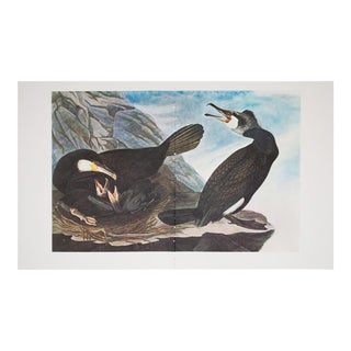 1960s Cottage Style Lithograph of Great Cormorant by John James Audubon