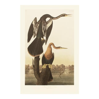 1990s Anhingas or Snake Birds by Audubon, Large Cottage Print For Sale