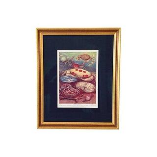 Antique Ocean Crabs Lithograph, C.1900 For Sale