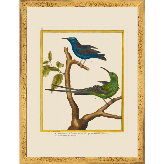 Not Yet Made - Made To Order Vintage Framed Martinet Birds. Hummingbirds and Friends Set - Set of 6 For Sale - Image 5 of 13
