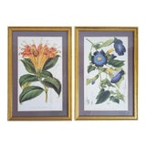 Image of Antique Framed French Botanical Prints- a Pair For Sale
