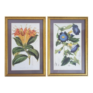 Antique Framed French Botanical Prints- a Pair For Sale