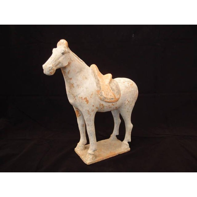 A Chinese Tang dynasty pottery model of a horse. The majestic animal is portrayed standing foursquare on a rectangular...
