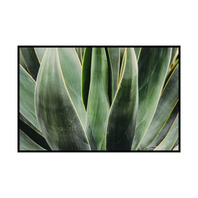 Original photograph part of our Flora collection. Lightjet Type C Print 24x36in Other Sizes available: 13x19 / 16x20....