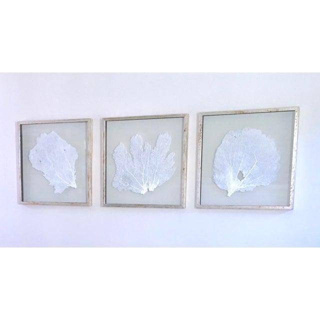 Karen Robertson Silver Framed Sea Fans ~ Coastal Wall Art Decor ...