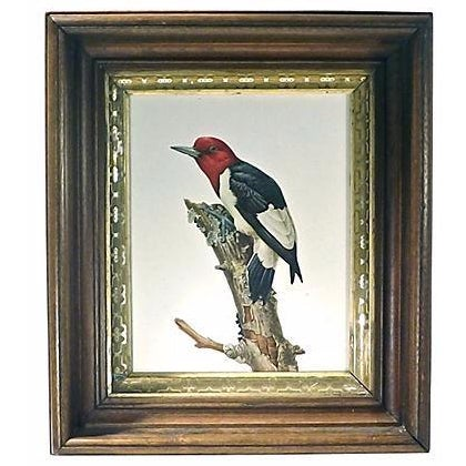 Vintage Wild Bird Hand-Colored Engraving - Image 1 of 2