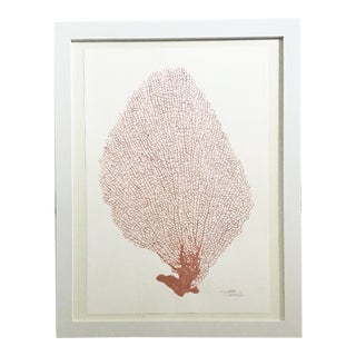 Original Painting of Coral For Sale