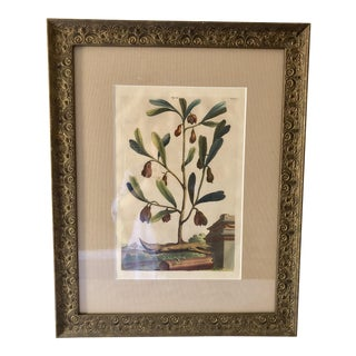 19th Century Antique Abraham Munting Hand Colored Framed Botanical Print For Sale