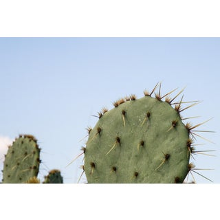 Prickly Pear and Blue Sky 2 Photographic Print