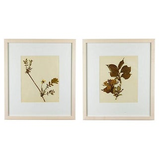 1900s Antique Edwardian Framed Botanical Herbariums - a Pair For Sale