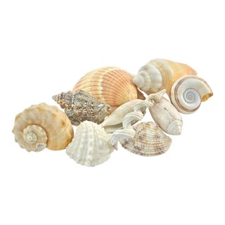 Natural Shell Collection-Set of 10