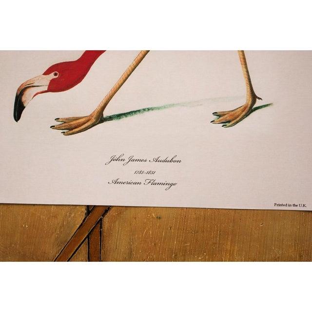 2010s American Flamingo by John James Audubon, Large Reproduction Print For Sale - Image 5 of 9