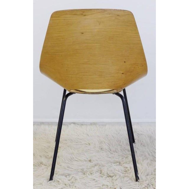 "1950s Set of Three Pierre Guariche ""Tonneau"" Bentwood Chairs for Steiner Edition, 1954 For Sale - Image 5 of 8"