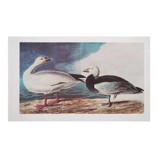 1960s Cottage Style Lithograph of Snow Goose by John James Audubon