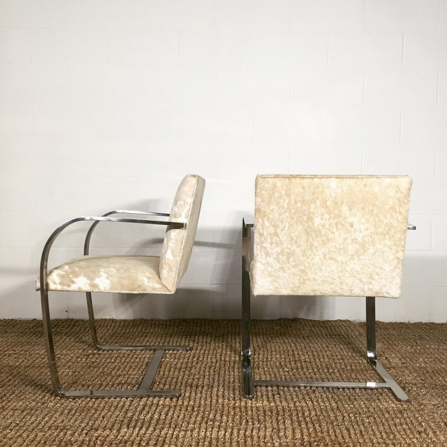 Knoll Forsyth One of a Kind Mies Van Der Rohe Brno Chairs for Knoll in Brazilian Cowhide - Pair For Sale - Image 4 of 6