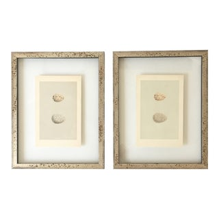 Framed Antique Morris Egg Prints - A Pair