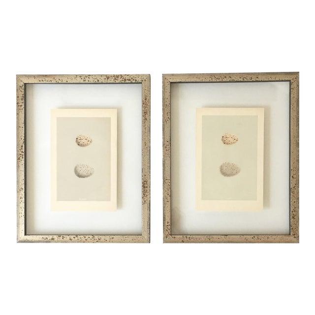 Framed Antique Morris Egg Prints - A Pair For Sale