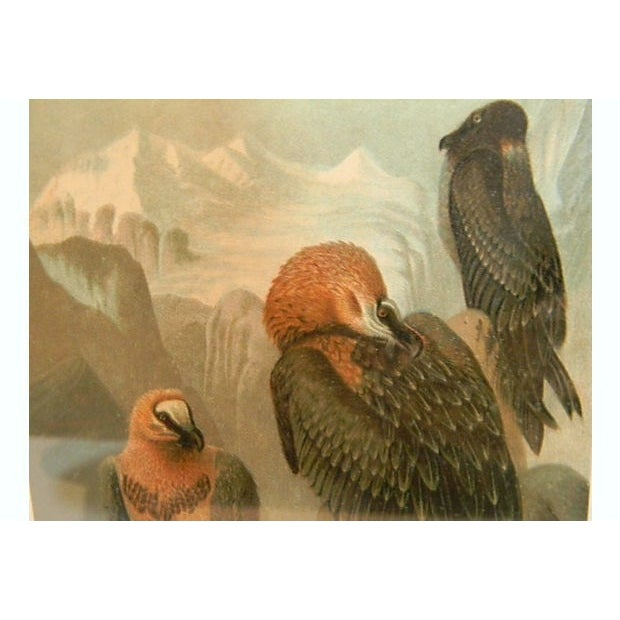 Prang 19th C. Chromolithograph of Vultures For Sale - Image 4 of 5