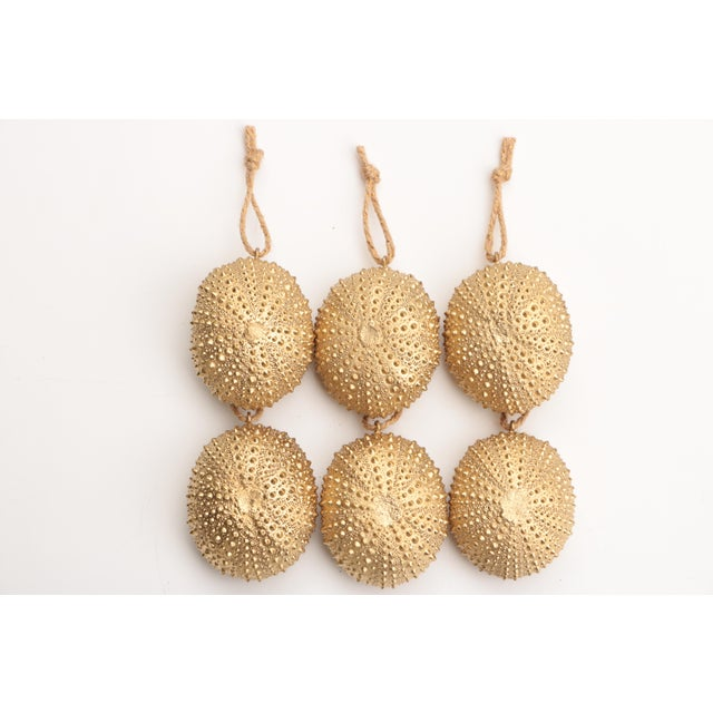 Not Yet Made - Made To Order Golden Sea Urchin Ornaments - Set of 6 For Sale - Image 5 of 6