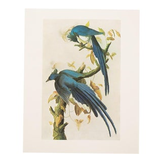 "1960s Vintage Cottage Style ""Columbia Jay"" Lithograph by Audubon For Sale"