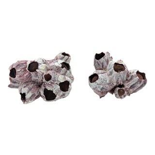 Natural White and Pink Barnacle Clusters - a Pair (B) For Sale
