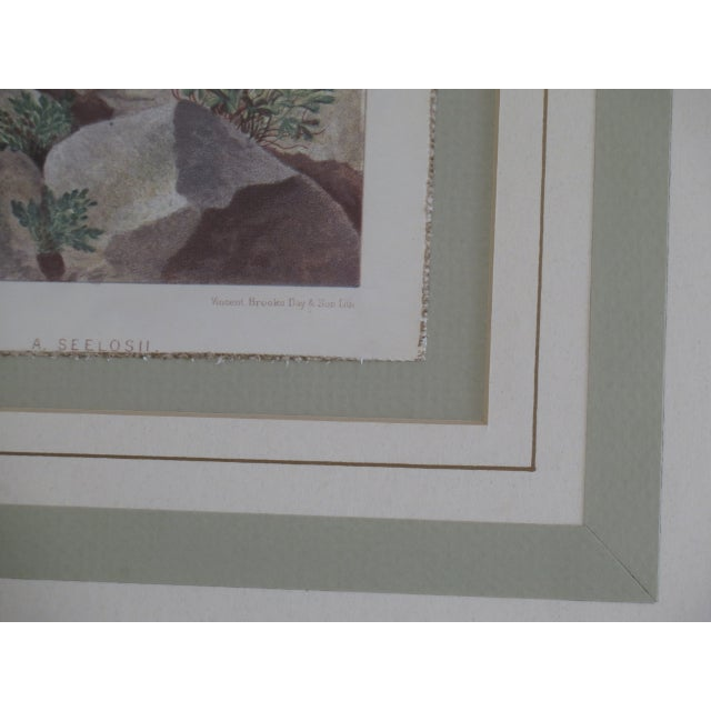 Vincent Brooks Day & Sons Decorative Lithograph Fern Prints - a Pair For Sale - Image 4 of 13