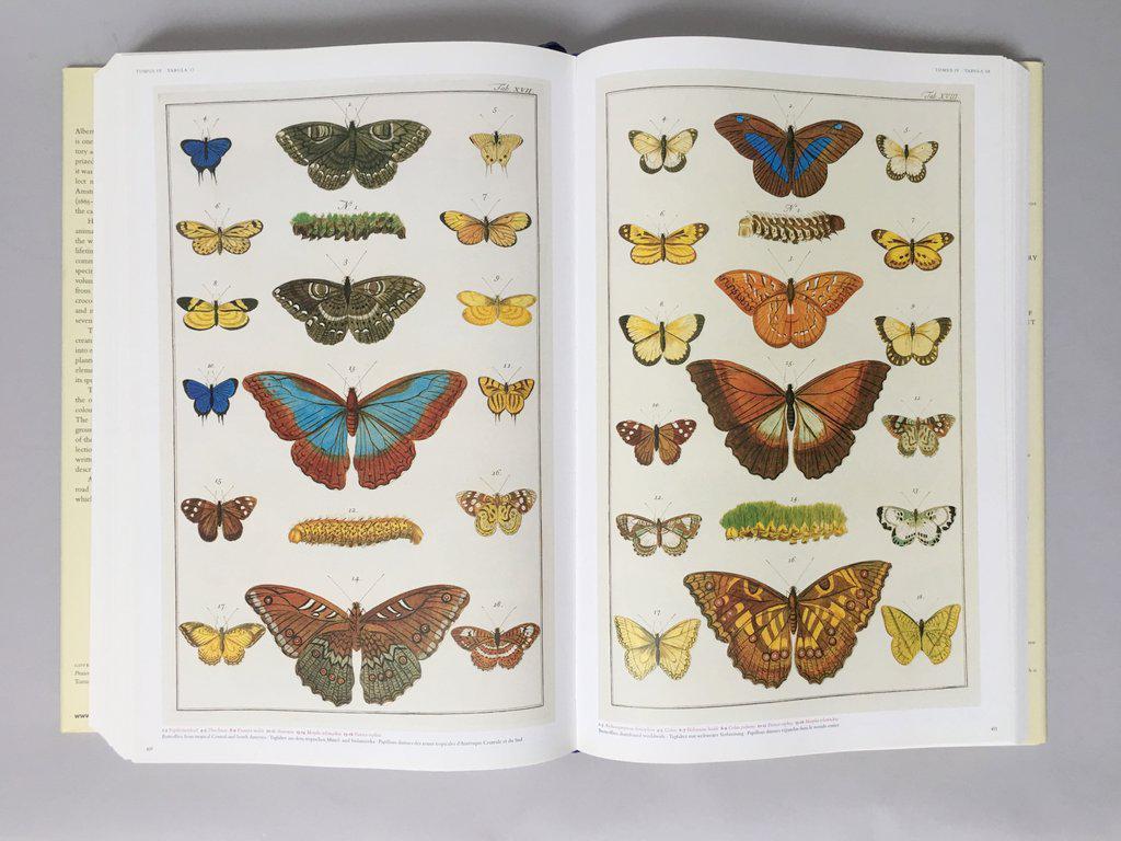 U0027Cabinet Of Natural Curiositiesu0027 Oversized Coffee Table Book   Image 4 Of  11. U0027