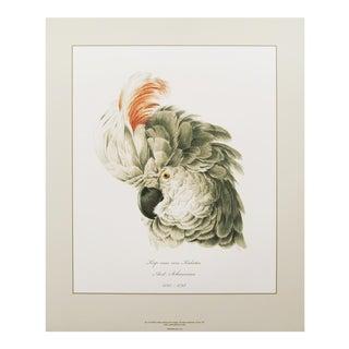 1750s Aert Schouman Cockatoo Head Study Large Print N1 For Sale