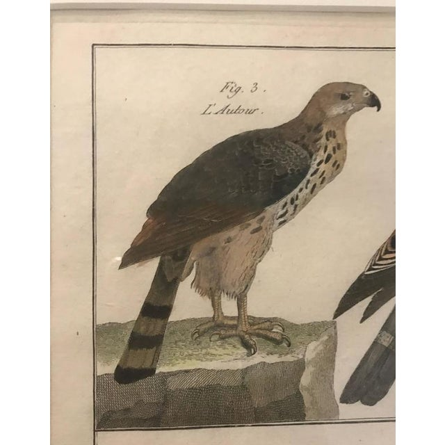 French 19th Century Histoire Naturelle Hawks Print For Sale - Image 3 of 6