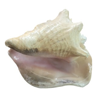 1970s Natural Conch Shell For Sale