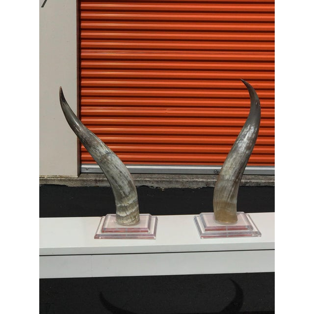 Mid-Century Modern Horns on Lucite Bases - a Pair For Sale In Miami - Image 6 of 8