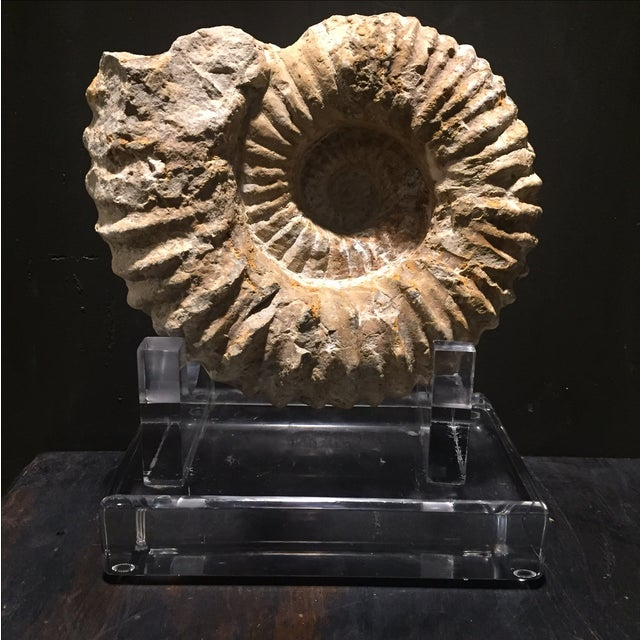 Moroccan Ammonite Fossil on Custom Lucite - Image 2 of 7