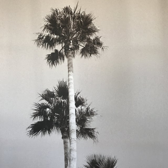 Contemporary Black & White Palm Tree Print For Sale - Image 3 of 8