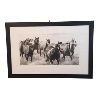 David Bjurstrom Framed Drawing of Horses For Sale