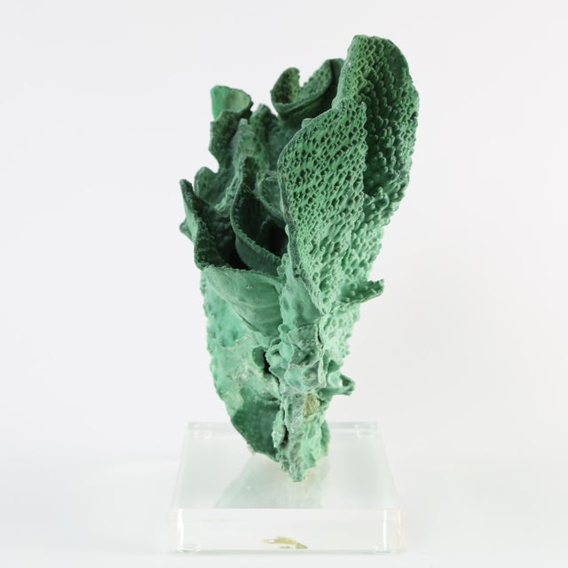 Coral VINTAGE GREEN CORAL SPECIMEN MOUNTED ON A LUCITE STAND For Sale - Image 7 of 10