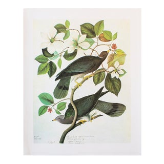1966 Vintage Cottage Lithograph of Band-Tailed Pigeon by John James Audubon For Sale