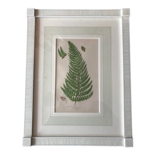 19th Century French Common Prickly Fern Lithograph For Sale