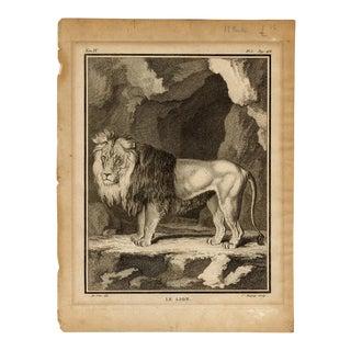 """""""Le Lion"""", Original 18th Century Copper Plate Engraving For Sale"""