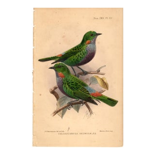 """Chlorochrysa Hedwigae"", Limited Edition Bird Lithograph Originally Hand-Colored and Pencil Signed by J. G. Keulemans Del. Et Lith. 1901 For Sale"