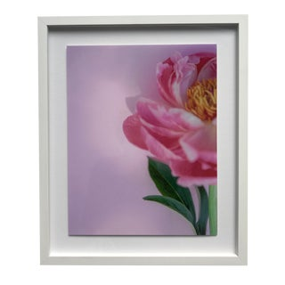 """""""Preppy Peony"""" Contemporary Botanical Photograph by Susan Johnson, Framed For Sale"""