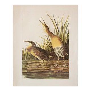 1966 Vintage Cottage Print of Clapper Rail by Audubon For Sale