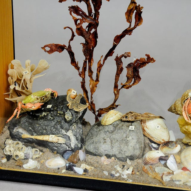 antique natural wunderkammer glass display with marine life in the depths of the sea. the specimen is set up like an...