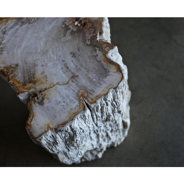 Wood Petrified Wood Side Table For Sale - Image 7 of 12