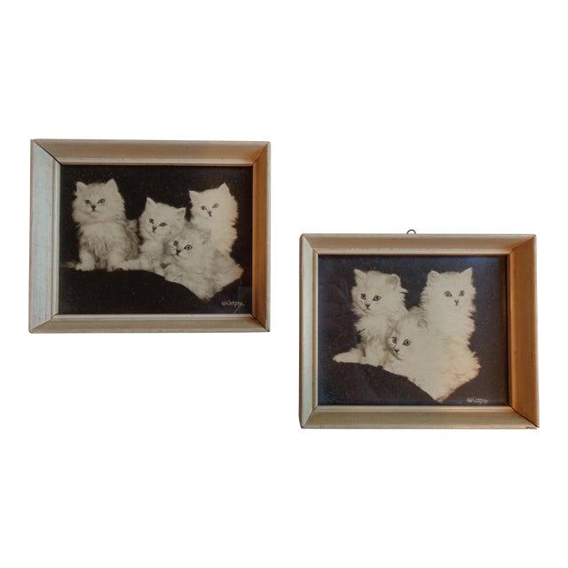 Framed Kitten Photographs - a Pair, Artist Bradley Currey For Sale