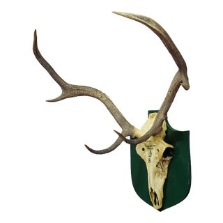 Vintage Black Forest Deer Trophy From Salem - Germany, Eggensteiner Forst 1947 For Sale