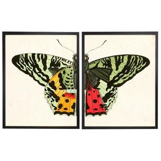 "Split Red and Green Butterfly - 38"" X 25"" For Sale"