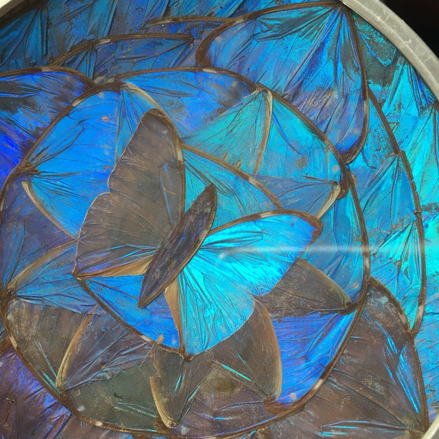 1960s Blue Morpho Butterfly Wing Art For Sale - Image 5 of 7